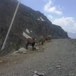 Famiglia di capre montagnose ci fanno compagnia mentre aspettiamo che finisca la pausa pranzo della seggiovia al colle Bettaforca